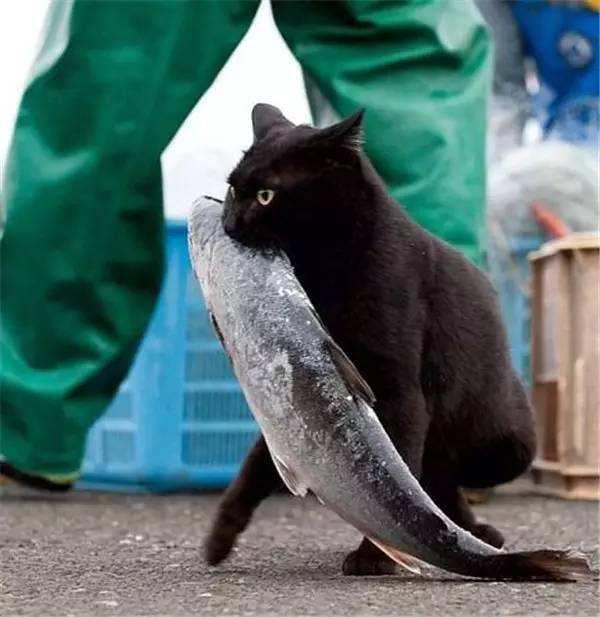 猫咪吃鱼学问 挑选注意事项